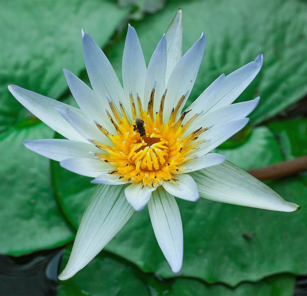 free jigsaw puzzles online lotus game jigsawpuzzle puzzle