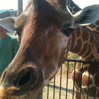 Tanganyika Wildlife Park   Animals & pets   Animals, Wildlife park