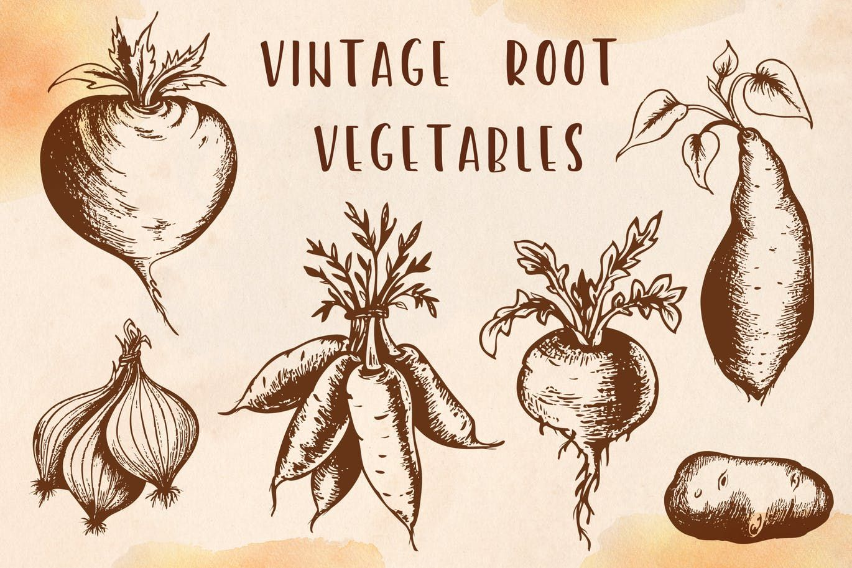 Vintage Root Vegetables By Artness On Envato Elements Roots Illustration Vegetable Illustration Vintage