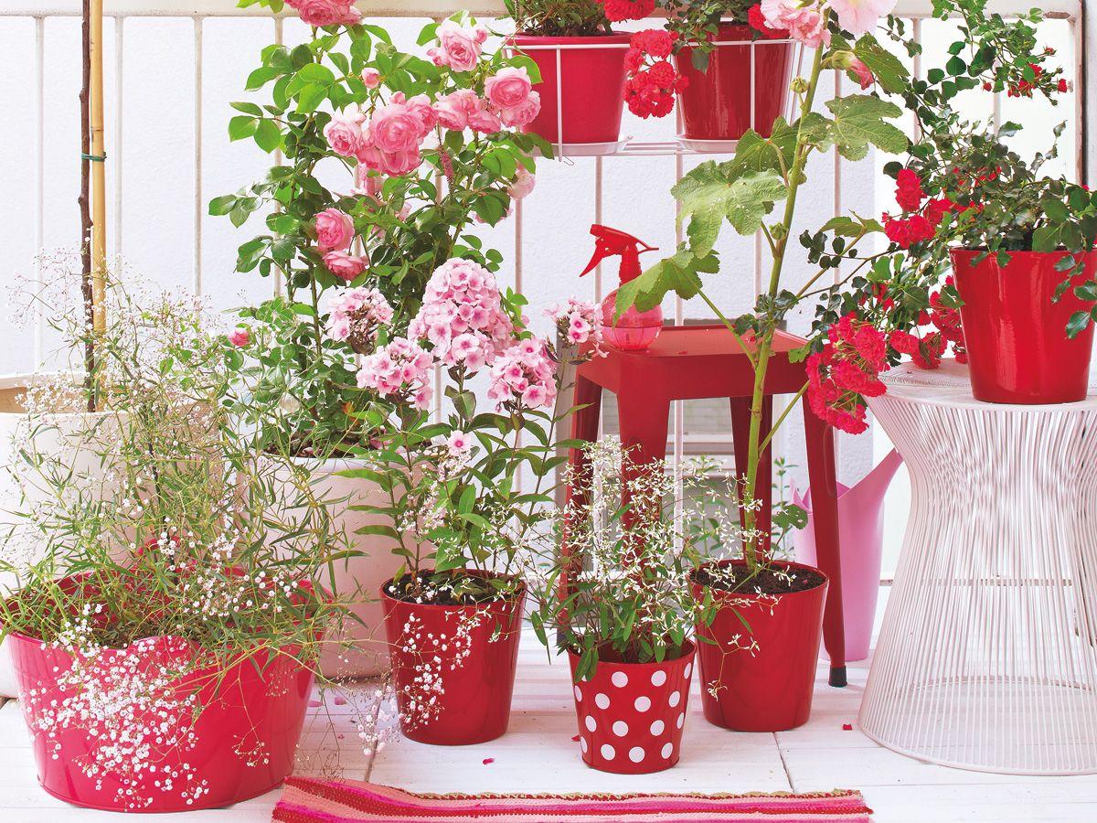 Balkon-ideen Für Jede Himmelsrichtung | Garten Gestaltungsideen Fur Hauseingang Blumen