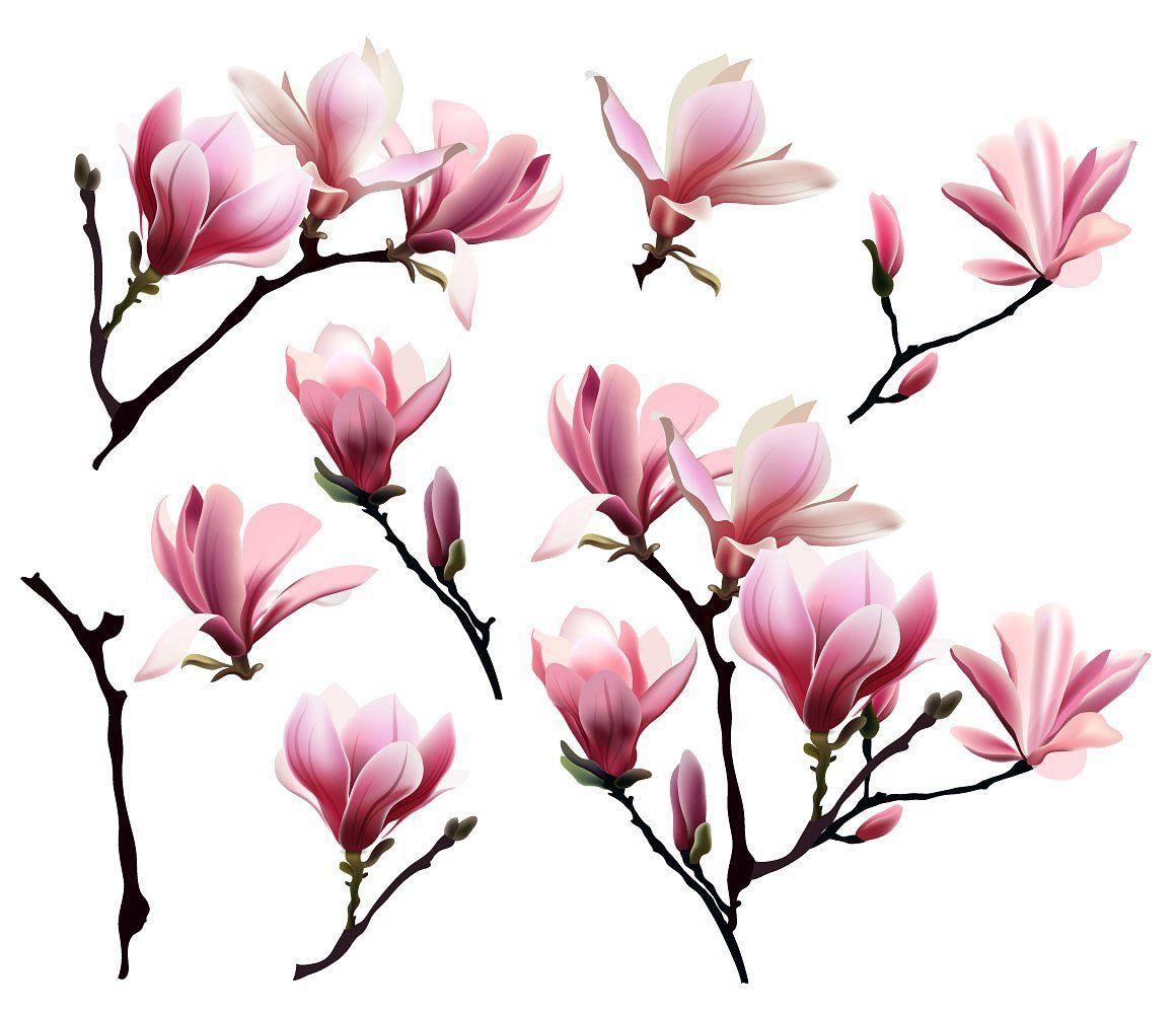 Blooming Magnolia Floral Set Magnolia Tattoo Magnolia Magnolia Flower