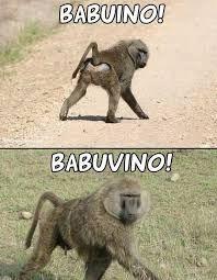 IMAGENS E FRASES E FACEBOOK: Babuino ou Babuvino?