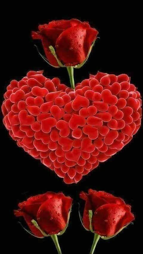 Um Dia Carregado De Amor Imagens De Amor Rosa Vermelha Rosas