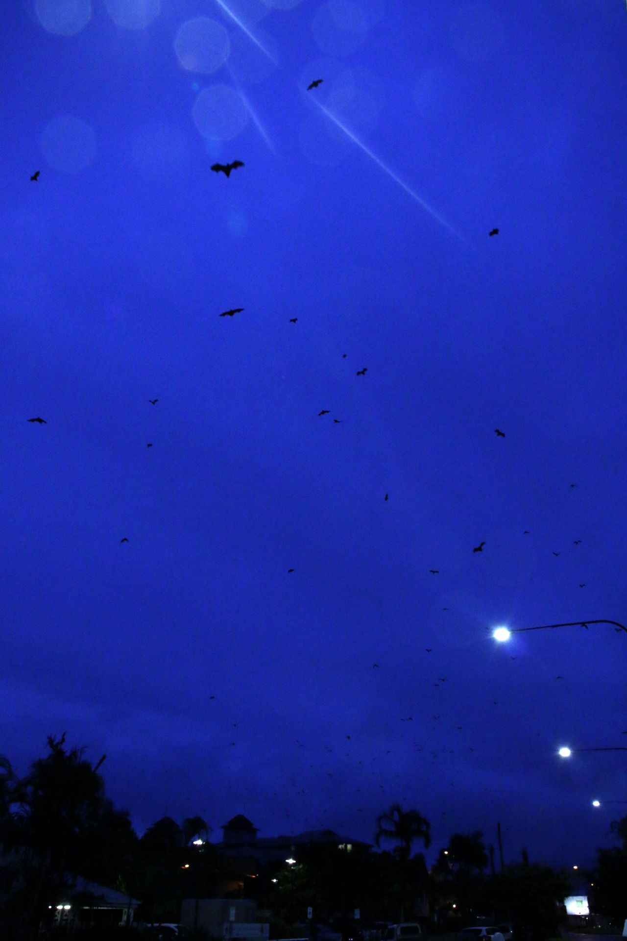 In Cairns, when the sun goes down, all those bats I've been taking pictures of take off, and just fill the sky. It's an amazing sight.