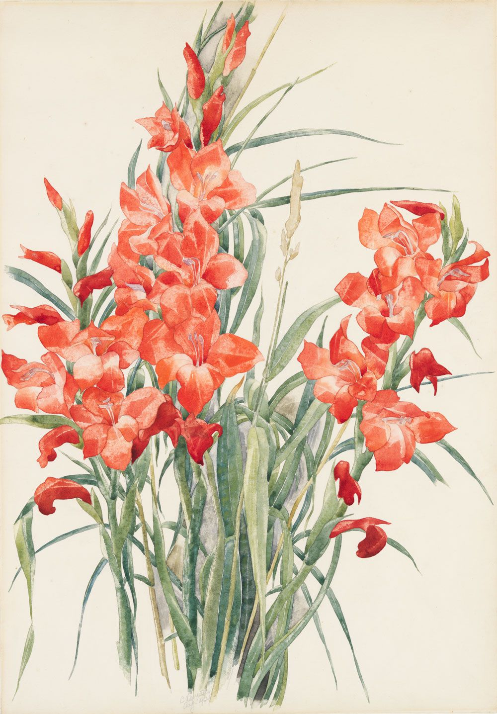 Charles Demuth was born today in 1883. Charles Demuth (1883–1935), Red Gladioli, 1928. Watercolor and graphite pencil on paper, Sheet: 20 x 14in. (50.8 x 35.6 cm). Whitney Museum of American Art, New...