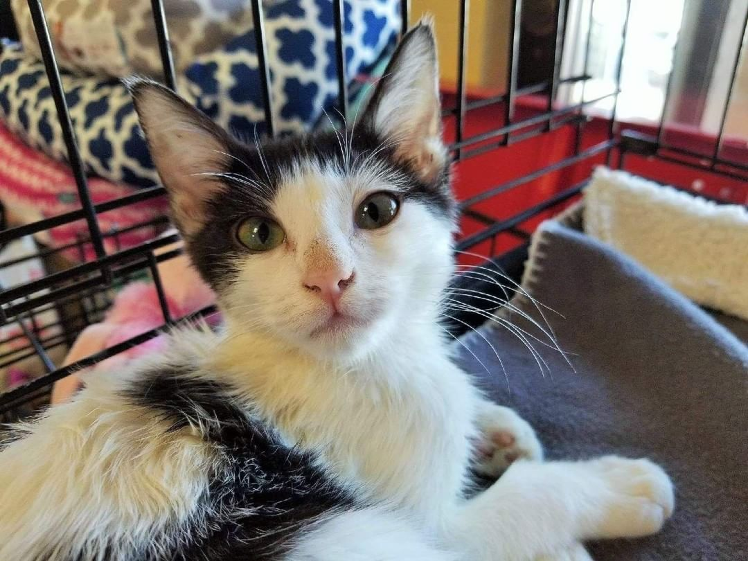 Join Us For A Sizzlin Summer Adoption Event This Saturday July 14 From Noon To 4 Pm At Petco San Juan Capistrano We Have Kitten With Images Petco Cat Adoption Kittens