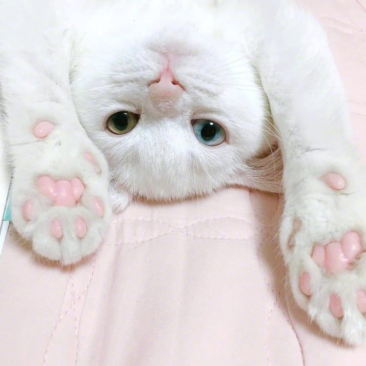 Animals Animal Pets Insta Beautiful Cat Cute Pack Https
