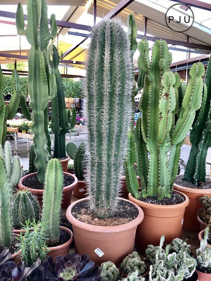 Cactus jardines cactus planta jard n de cactus y cactus for Vivero de plantas exoticas