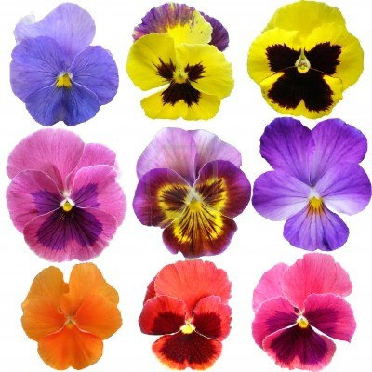 Stock Photo Amores Perfeitos Arte Em Aquarela Violetas