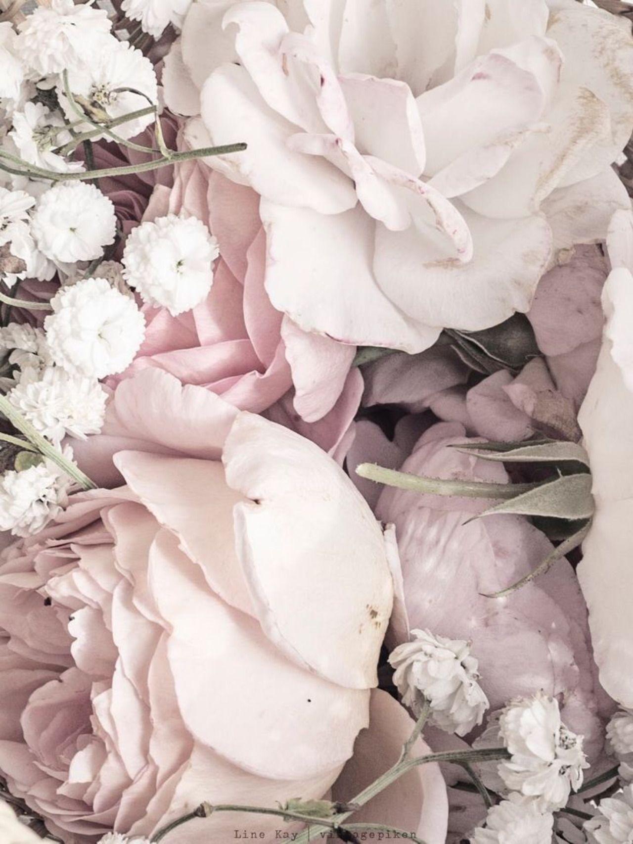 Pin von Nina auf Blumen | Pinterest | Hintergründe, Schlafzimmerwand ...