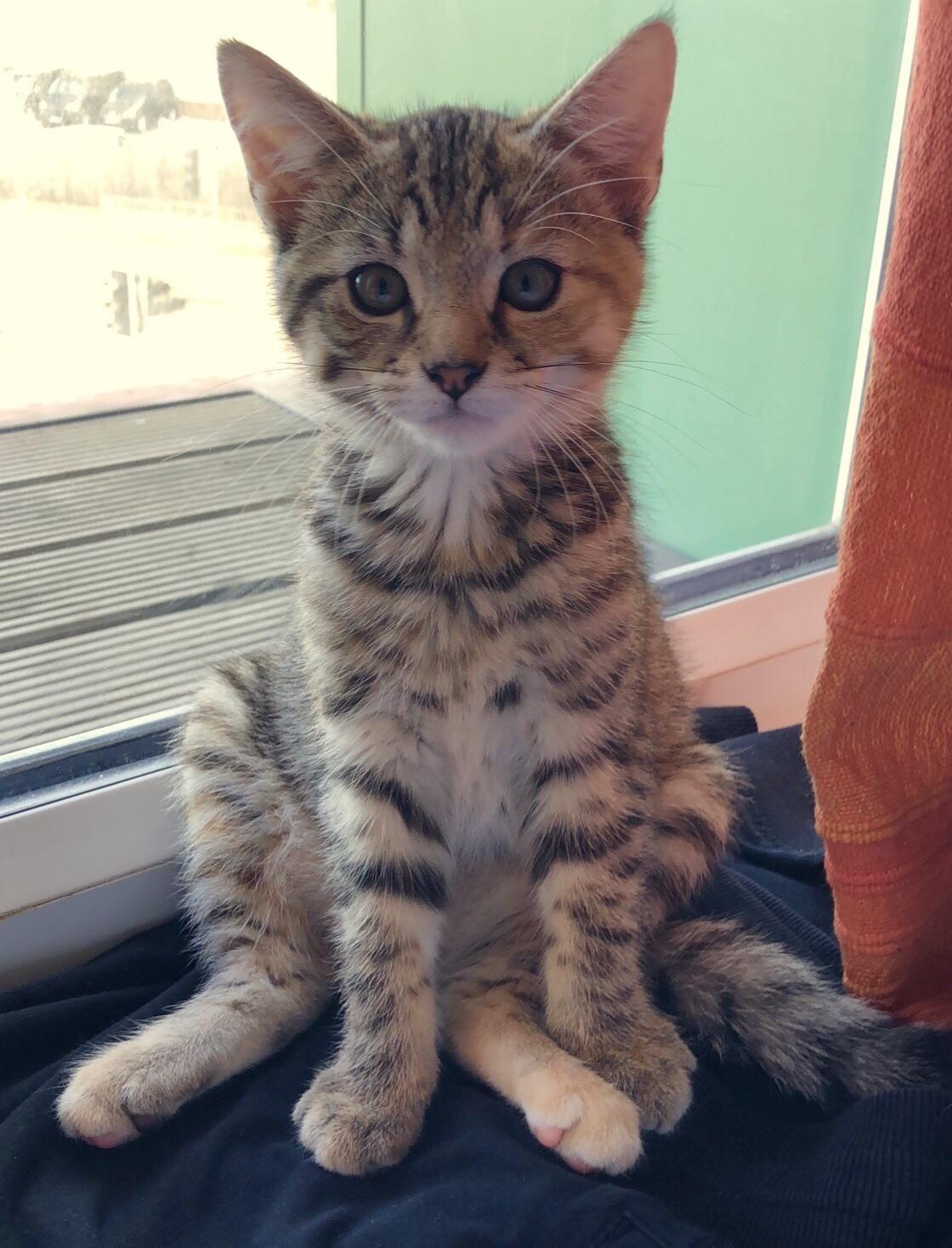 Chilling by the balcony. My 13 week old kitten; Tangerine