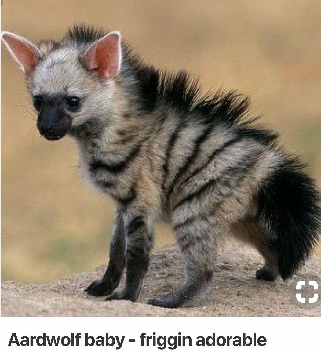 Pin By Becky Myrick On Wild In 2020 Cute Animals Unusual Animals Cute Baby Animals