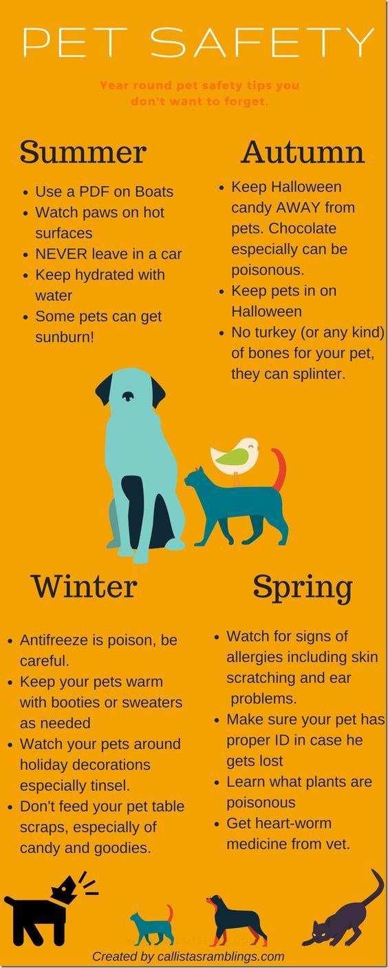 Summer pet care tips – Problems and remedies for pets in this summer