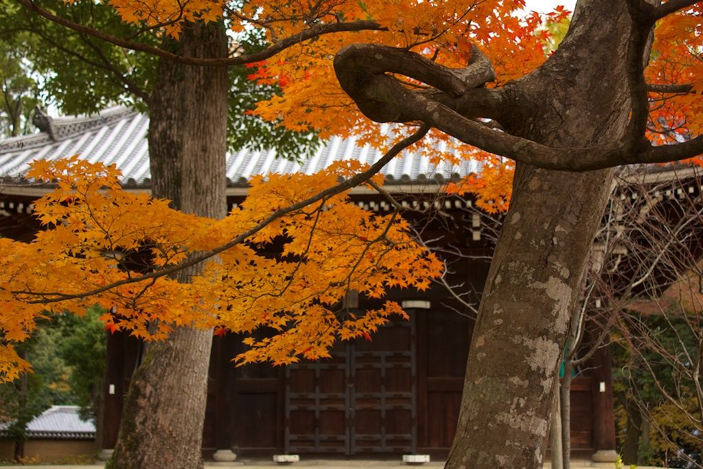 This is the Kusho Myojin Shrine in Ninna-ji temple (仁和寺) in Ukyō-ku, Kyoto during the autumn season!