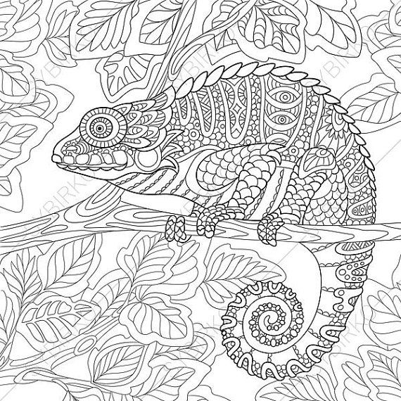 Chameleon Adult Coloring Page Zentangle By ColoringPageExpress