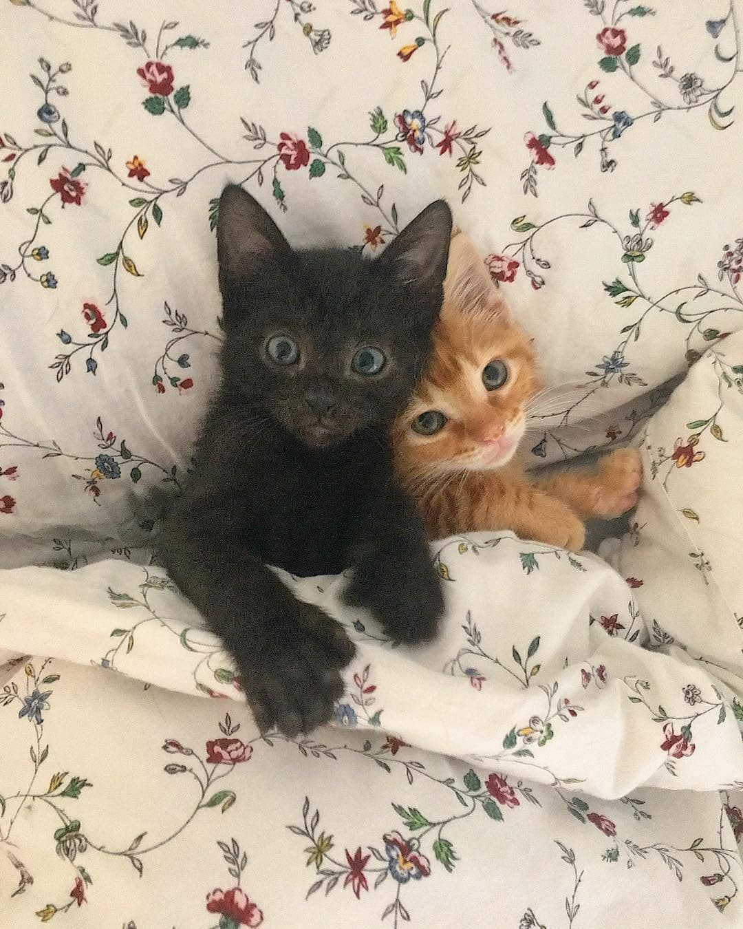 Pleasant Cats On Instagram Orlandokittenmom Happy Caturday Pleasantcats Smukke Katte Nuttede Dyreborn Dyr