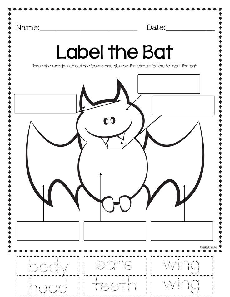 bats and spiders lesson plans