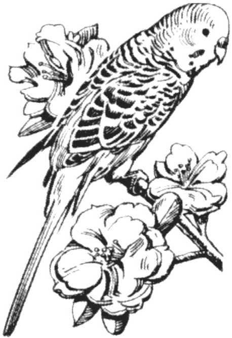 70 Best Russian Punch Images Bird Drawings Bird Art Bird