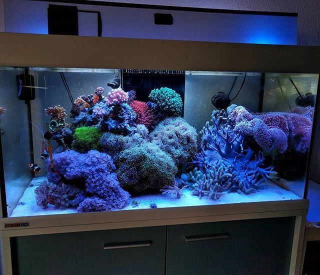 Pin By Alexis O'Rorke On Saltwater Aquariums