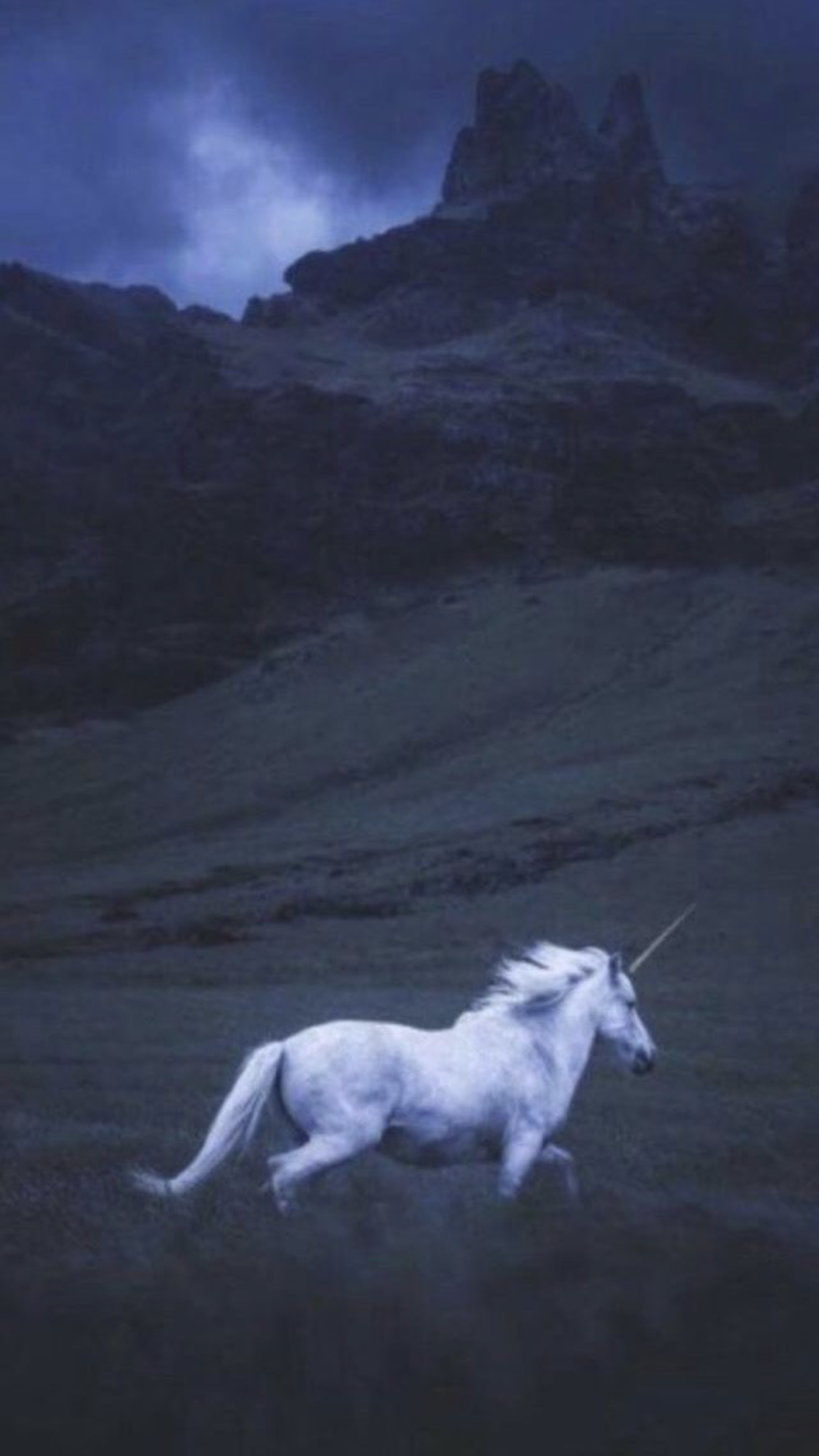 Pin By لويمش On خلفيات Pinterest Horses White Horses And Unicorn