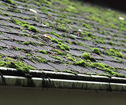 22 Everyday Products You Can Easily Make From Home For Less Roof Cleaning Roof Maintenance Moss Removal