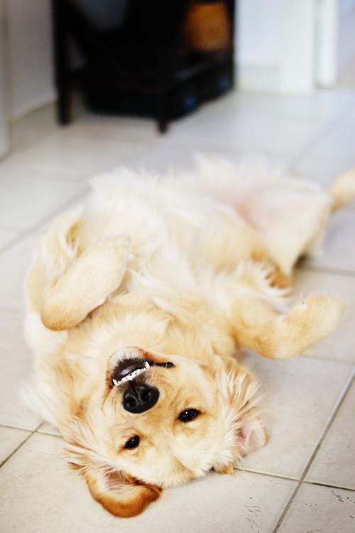 Puppy Cute Dog Nice Pet Animal Happy Beautifu