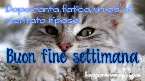 Gatto Stanco Buon Fine Settimana Immagine Nuova Greeting