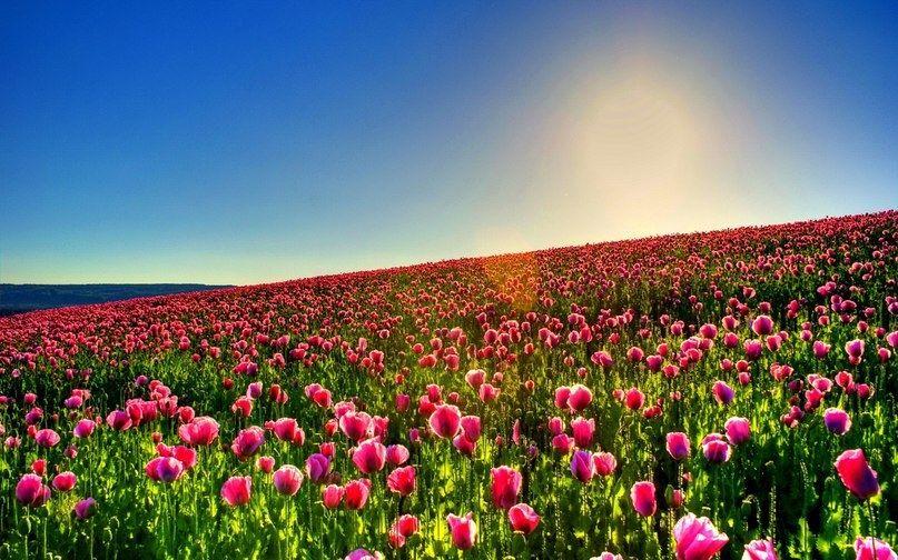 Фотографии красивого цветочного поля стоит возводить