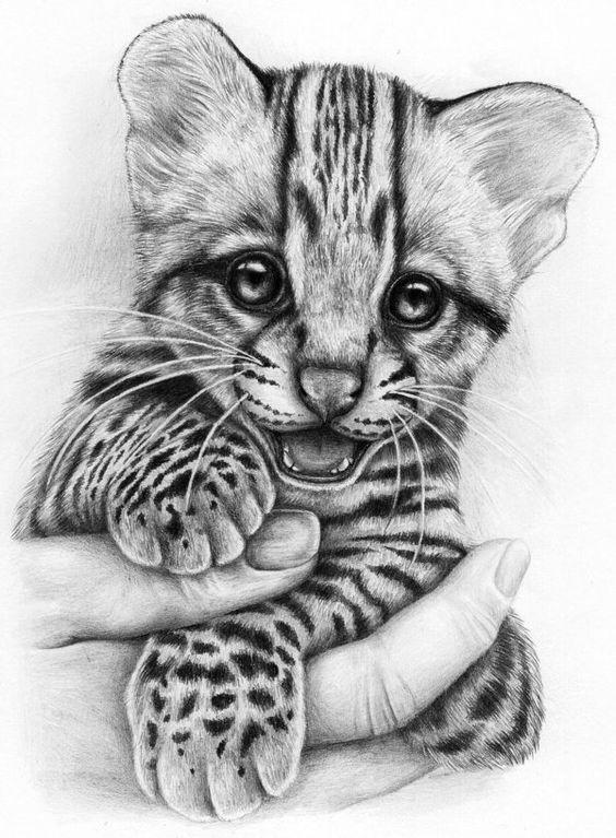 Pin de MysterEduardo en Dibujos A Lapiz  Pinterest  Tigres Bebs