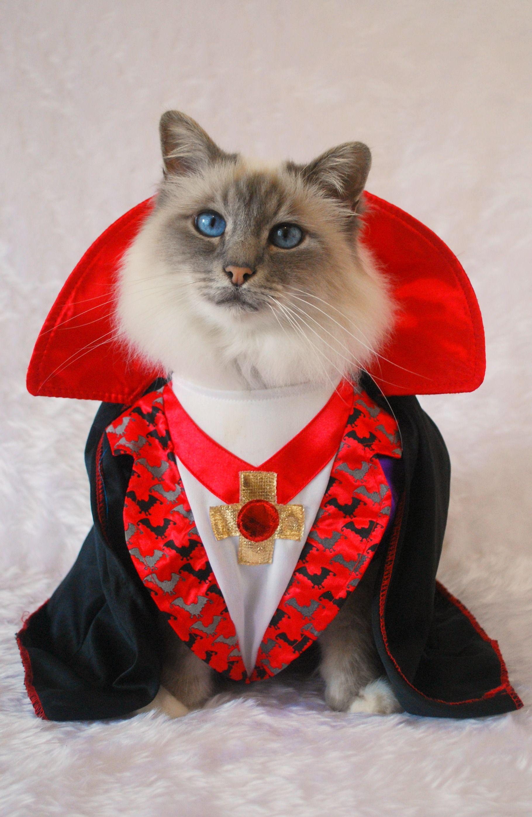 MR. HALLOWEEN CATS Cat halloween costume, Cat costumes