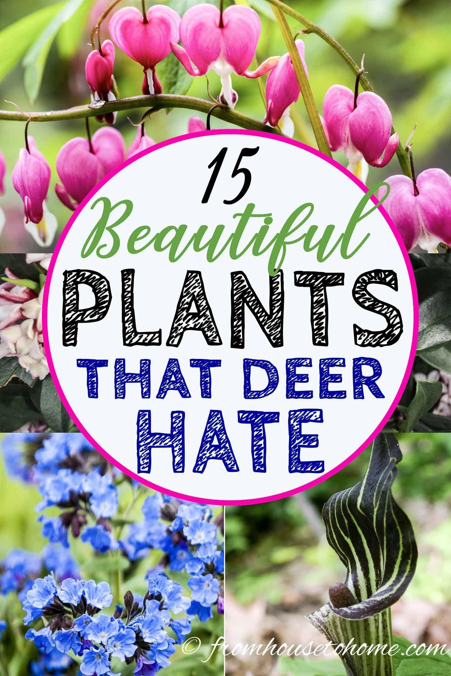 15 Beautiful Deer Resistant Shade Plants To Grow In Your Garden
