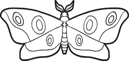 Moth Coloring Page | Moth, Free printable and Teaching kids