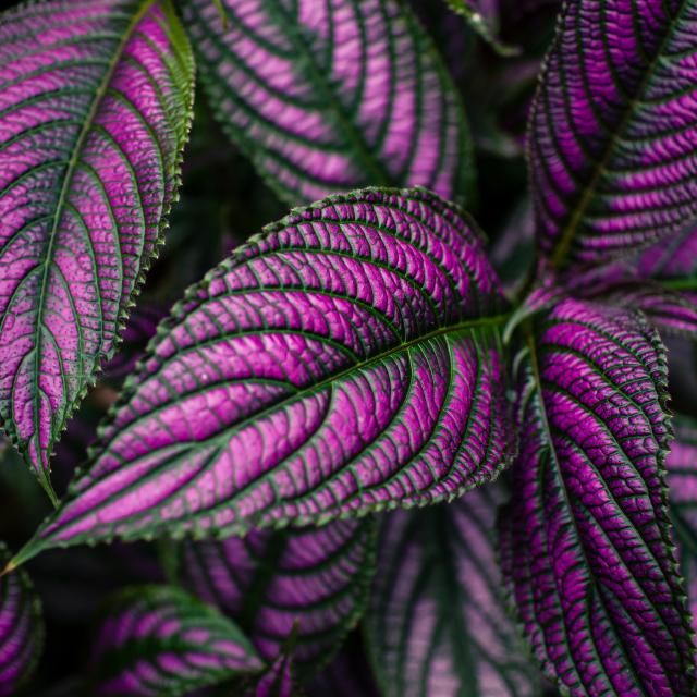 Color para tus espacios con m s sombra en el jard n - Plantas de sombra para jardin ...
