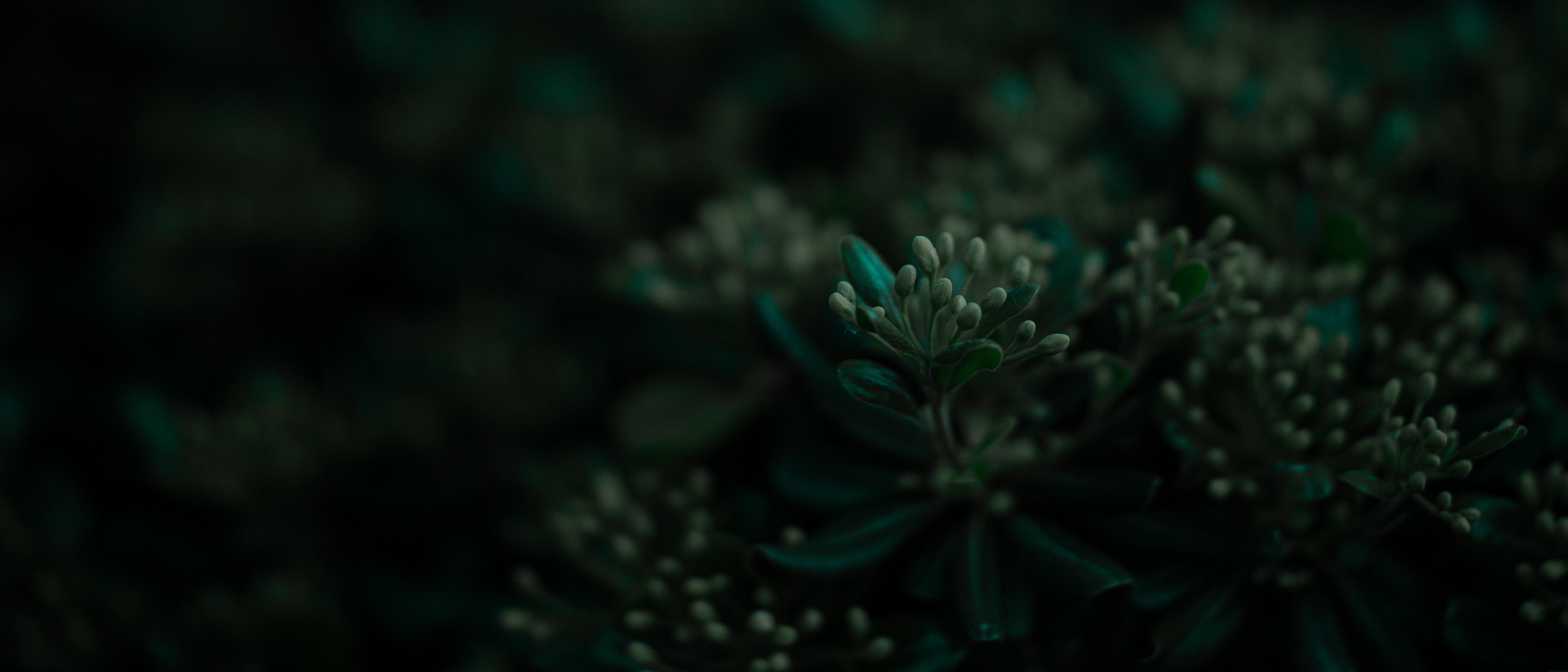 Plants Leaves Ultrawide Wide Screen 5k Wallpaper Hdwallpaper Desktop Wide Screen Screen Plants Hd Wallpaper