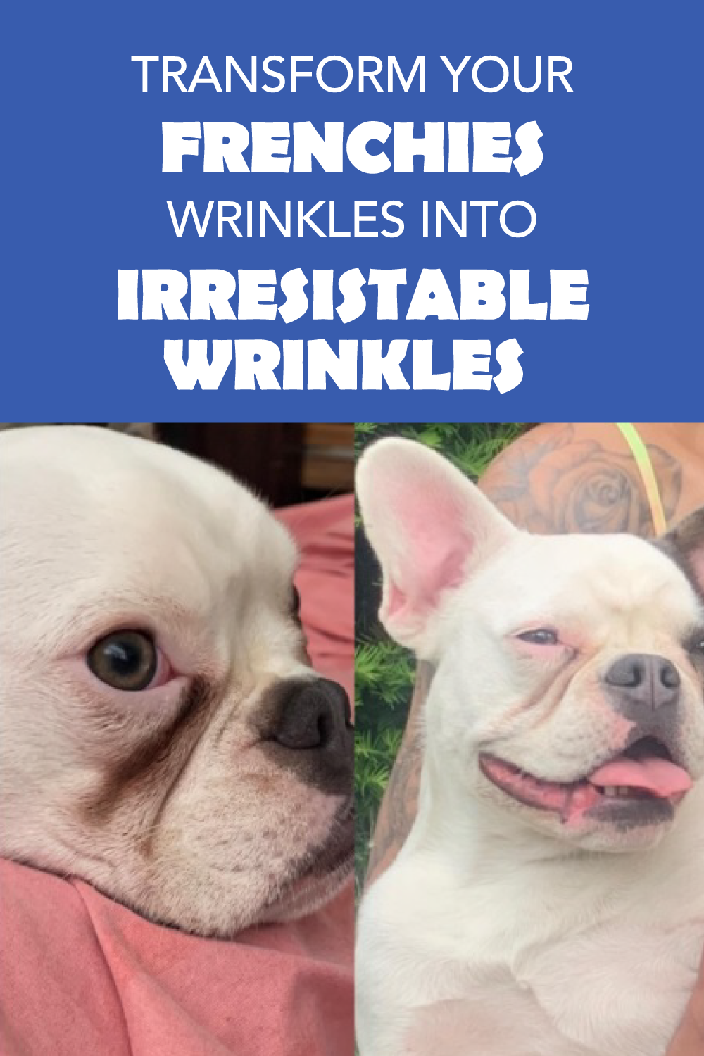 Transform Your French Bulldogs Wrinkles Into Irresistible Wrinkle In 2020 Wrinkle Dogs Dog Skin Infection Dog Skin Allergies