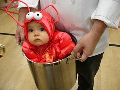 omg who has a baby that i can dress up in a lobster suit and carry in a pot
