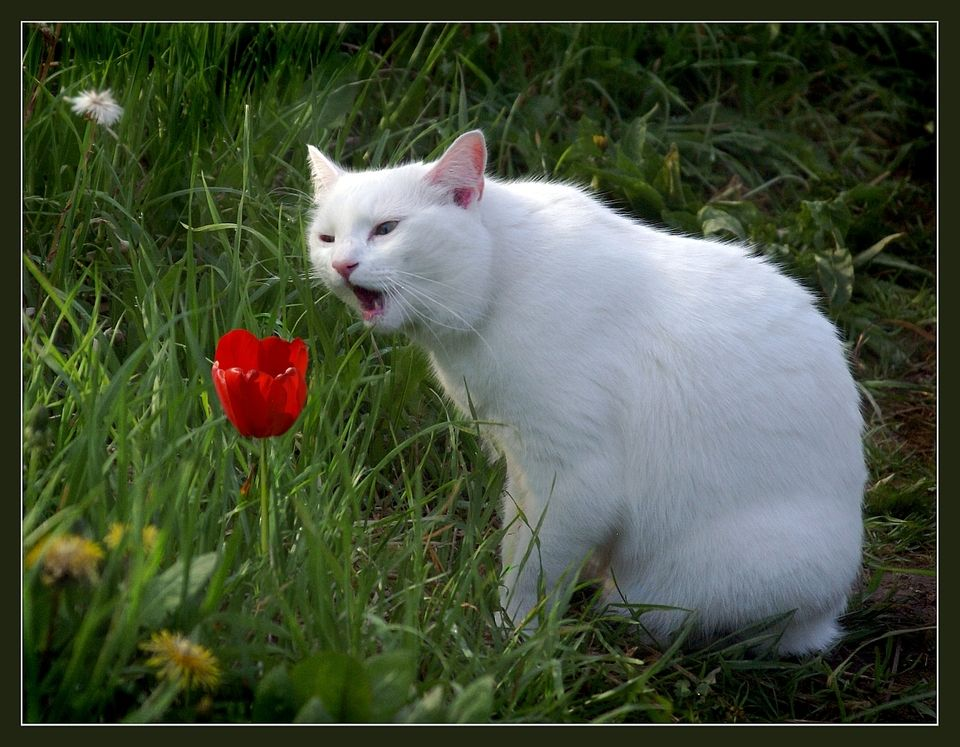 """Yeah you, tulip, I iz talkin' to you!"""