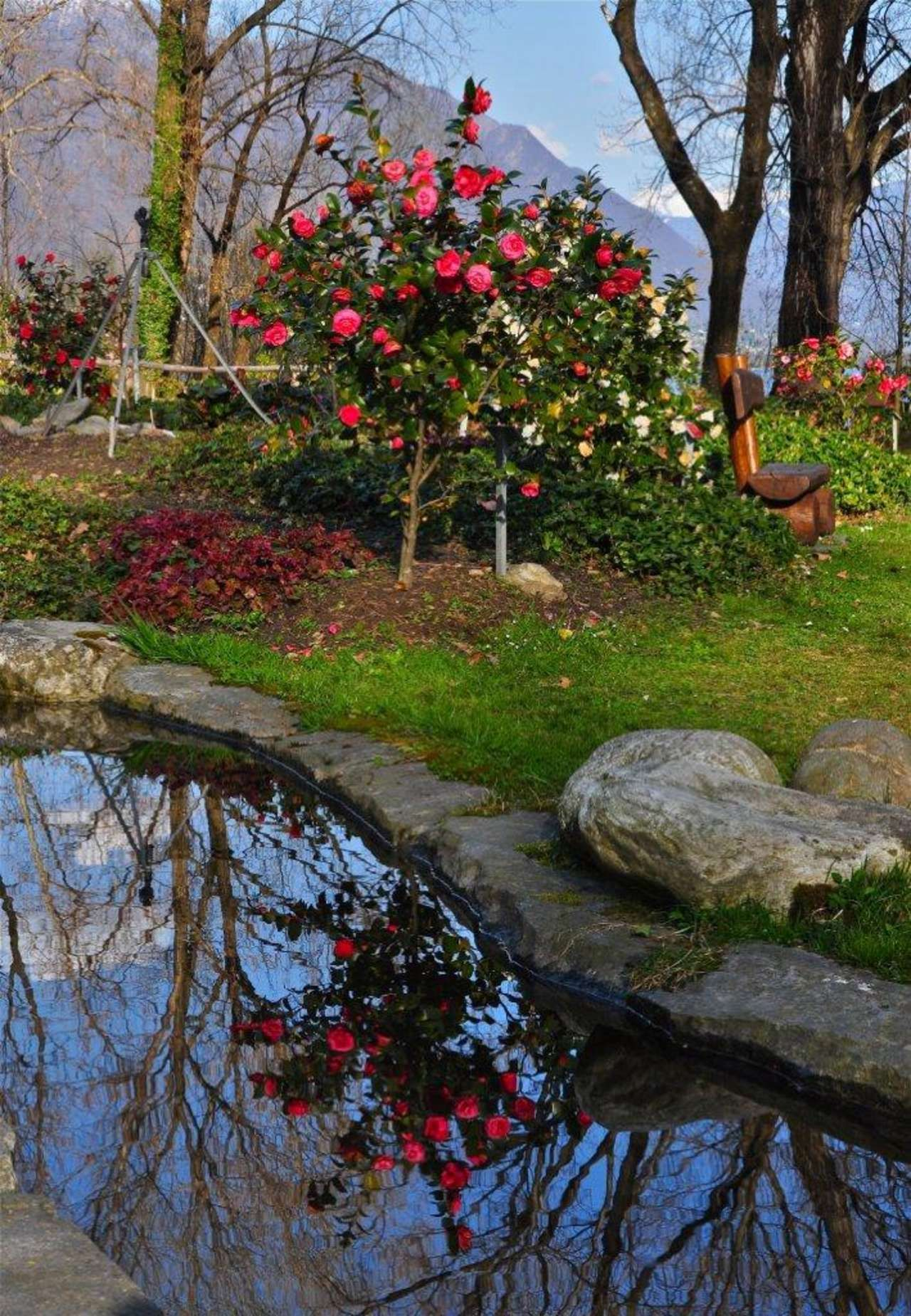 Parco delle Camelie, Lucarno GARDENS OF SWITZERLAND