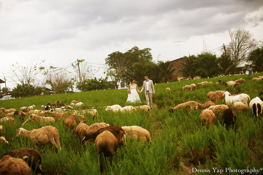 Uk farm weddings wedding uk farm johor kluang dennis yap uk farm weddings wedding uk farm johor kluang dennis yap photography lavendar junglespirit