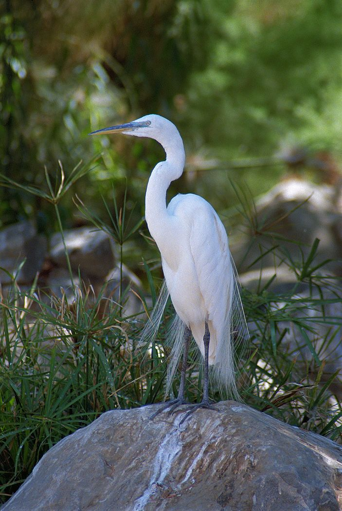Symbolic Meaning Of The Heron Interesting Pics Pinterest