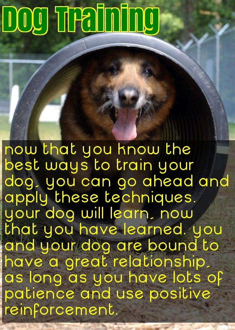 Enjoy A Healthy And Happy Dog With These Ideas Easiest Dogs To