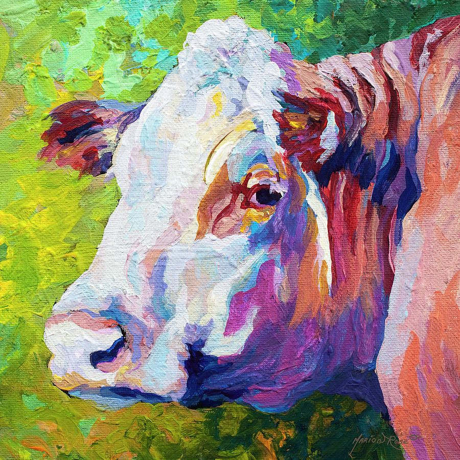 White Face Cow Painting by Marion Rose - White Face Cow Fine Art Prints and Posters for Sale