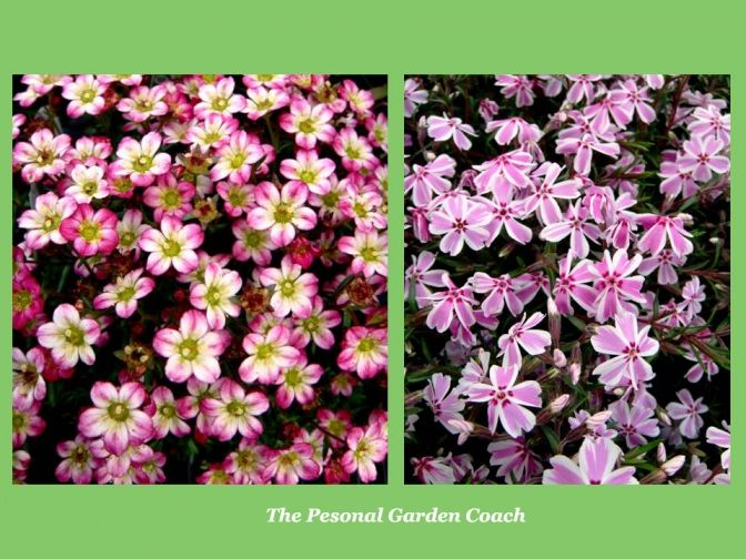 Early flowering perennial performers for impact pinterest early spring flowering perennials for impact spring flowers gardendesign mightylinksfo
