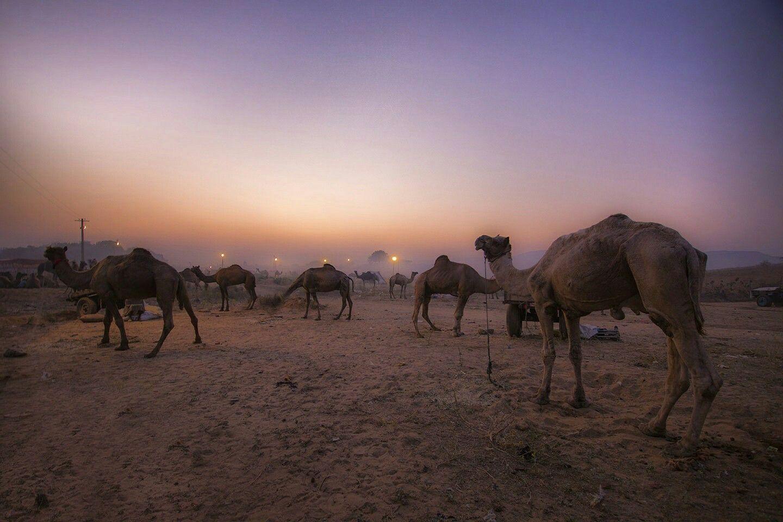 Pin by Zehra Rizvi on Photoghraphy Desert information