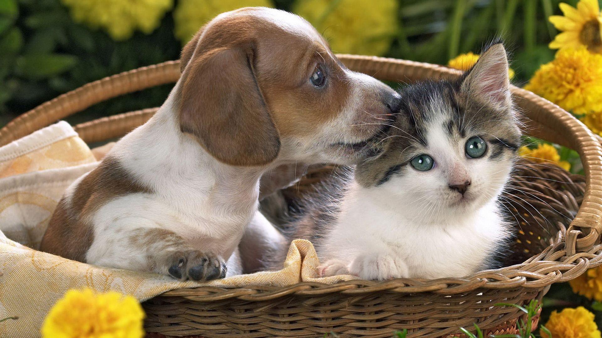 Kitten and puppy wallpaper