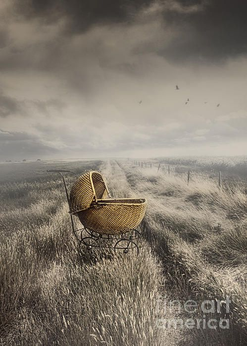 Abandoned antique baby carriage in field - Sandra Cunningham