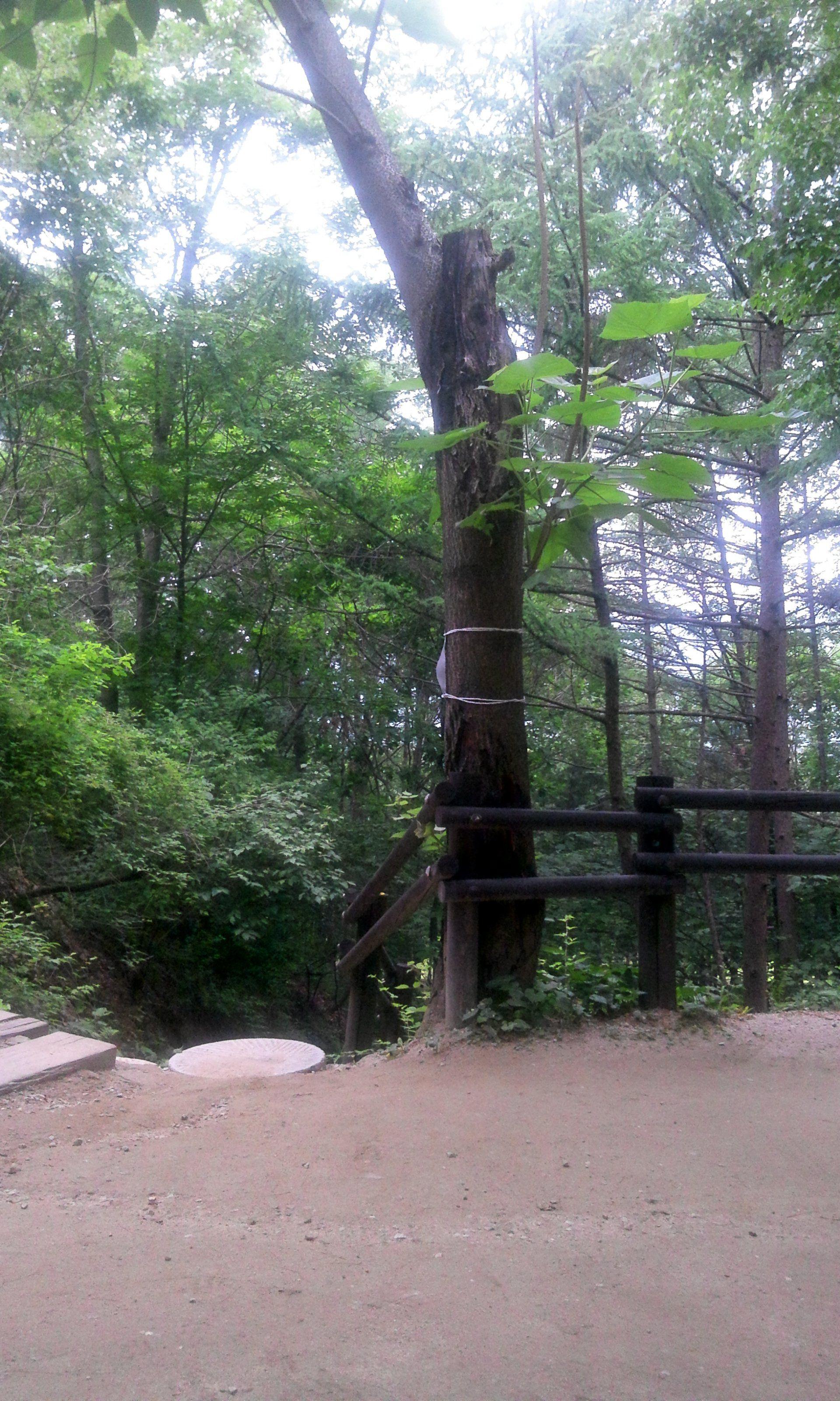 나무가 많은 곳에서 걷는걸 좋아합니다.