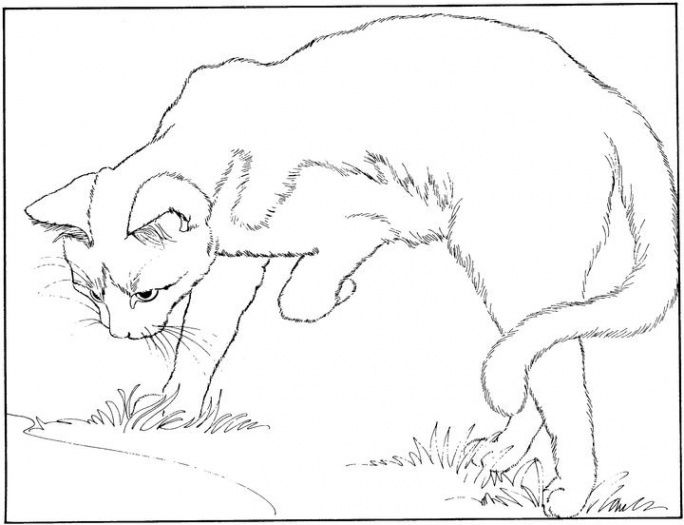 Cat Color Pages Printable Cat 6 Coloring Page Super Coloring