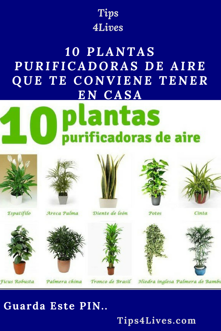 10 Plantas Purificadoras De Aire Que Te Conviene Tener En Casa Tips Life Vida Salud Remedios Tips4lives Diy H Growing Vegetables Plants Leaving Home