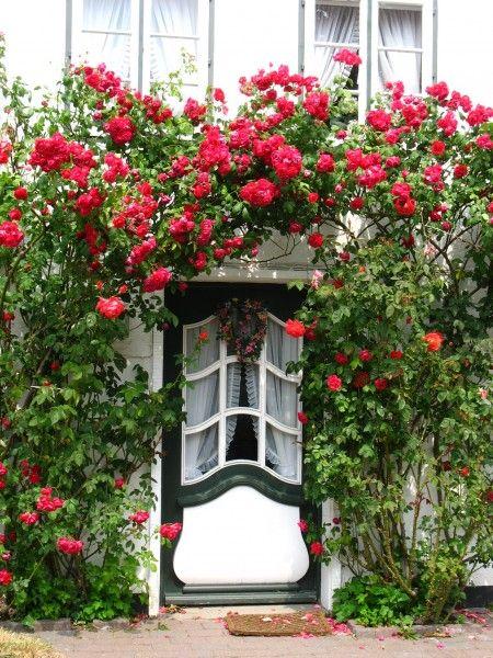 Precioso rosal trepador enmarcando una puerta... | Country Houses ...